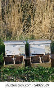 Two beehives with packages of bees just put in the hive.