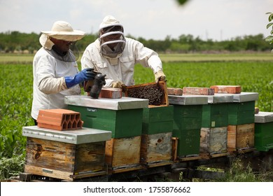 two beekeepers dressed in special suits inspect the condition of the bees and the amount of honey, photographed at the bee colony