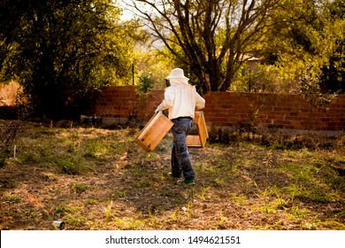 Two Beekeepers in protective workwear are transporting a beehive. Beekeeping concept. Beekeepers harvesting honey.apiary