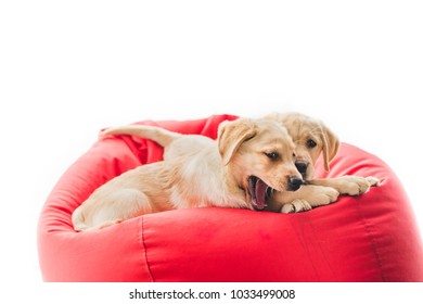 Two beige puppies lying on bag chair isolated on white