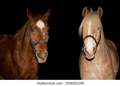 two best horsefriends in front of the camera