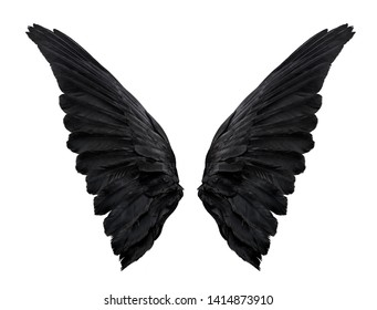 two big black raven wings isolated on white background, closeup