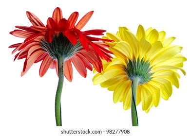 Two big gerbera isolated over white