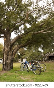 Two bikes in a park under a massive old oak tree