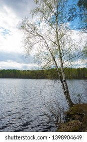 Two birches with young green leaves bent over the water on a cloudy day.