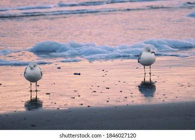 Two birds at a beach in South Carolina.