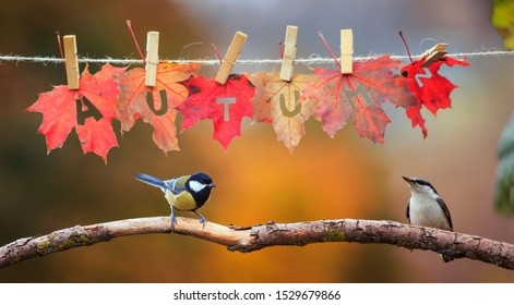 two birds chickadee and creeper sit in the garden under a banner with the word autumn carved on red maple leaves on clothespins and rope on a Sunny day