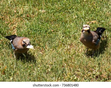 two birds eat in the meadow