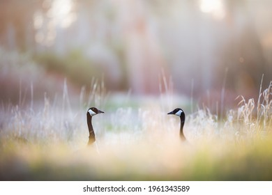 Two Birds Facing Each Other with Colorful Blurred Background