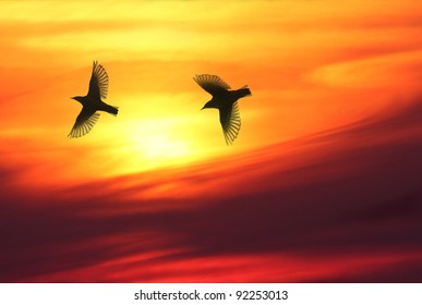 Two birds flying over sky in sunset, warm and beautiful cloudscape in background.