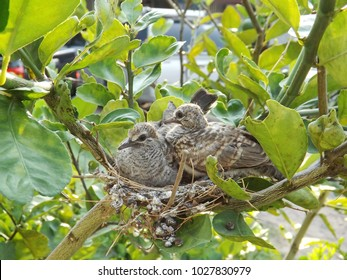 Two birds in a nest alone.