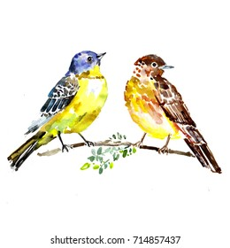 Two birds on a branch. Watercolor