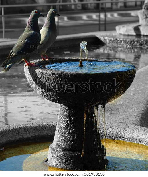 Two birds on the fountain