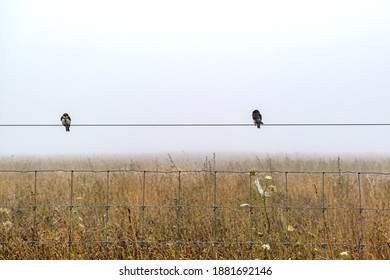 Two birds on a wire in fog over a farm field of dried wild flowers