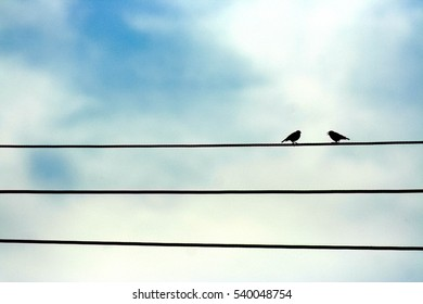 Two birds singing on top of a cable