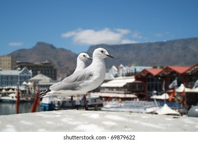 Two birds in the Victoria & Albert Waterfront Cape Town, South Africa