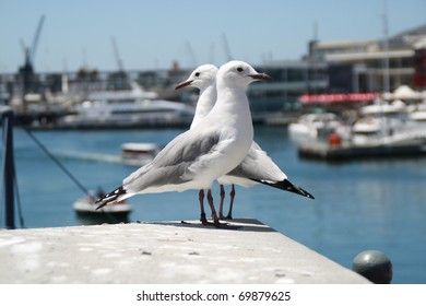 Two birds at The Victoria & Albert Waterfront in Cape Town, South Africa