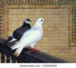 two birds, a white dove and a black pigeon, standing in an interior railing with ornaments in the background framing them - beautiful couple