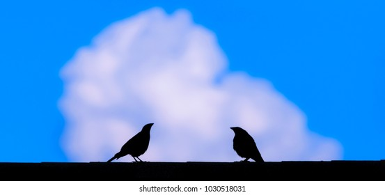 Two birds-Starlings on roof talking-natures photography.