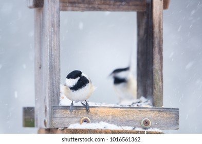 two black capped chickadees mirroring each other and eating at bird feeder in snow storm.  Close up with soft focus snow background.