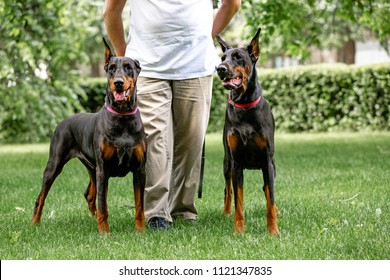 Leg Guards Images, Stock Photos & Vectors | Shutterstock