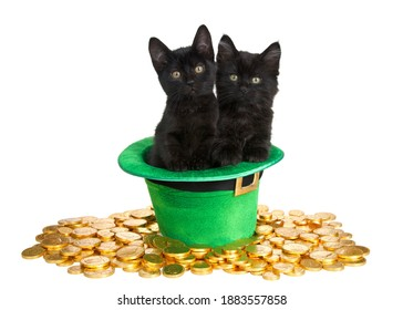 Two black kittens in a Saint Patrick's Day themed green top hat with  laying on a bed of gold coins isolated on white background. Fun holiday theme with cats