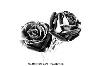 two black roses