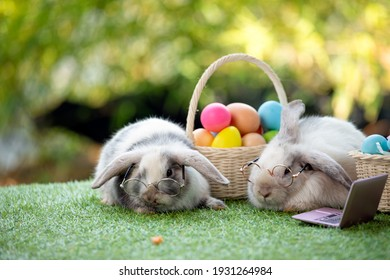 Two black and white young adorable bunny with glasses sitting on grass field with easter egg in basket and laptop together. Cute baby Netherlands Dwaf and Holland lops rabbit for Easter celebration