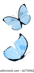 Two blue tropical butterflies isolated on a white background. moths for design