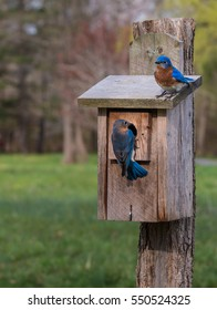 Two bluebirds on a bird house in a public park with blurred trees in background