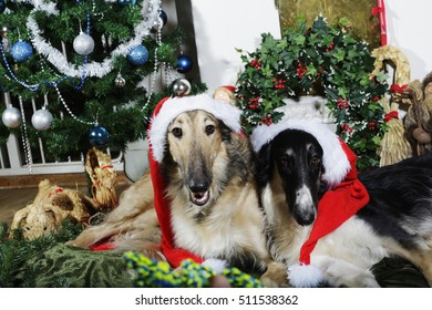 two Borzoi puppies dressed up as father christmas and wishing greetings