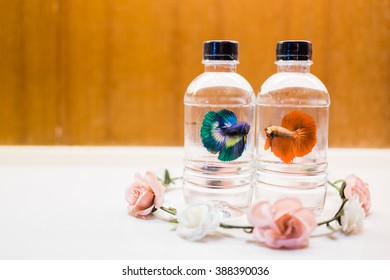 Two bottles drinking water with fighting fish printing and the flower tiara