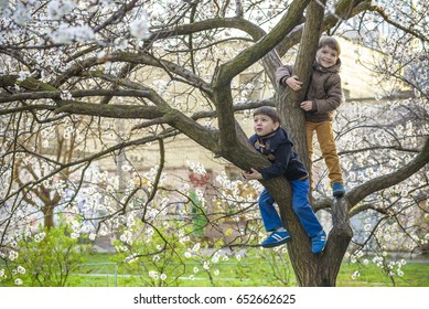 Two boys brothers kids hanging from a blossom spring tree and having fun in the nature.