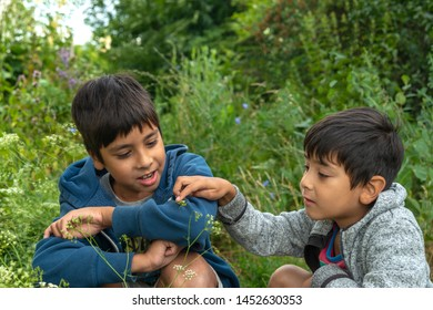 Two boys caught a praying mantis or a grasshopper in the forest and view it with curiosity.  Summer holidays for children.