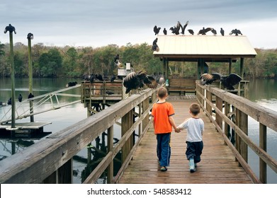 Two boys holding hands go forward between the huge and terrible birds - black vultures.  Manatee Springs State Park,  Florida, USA
