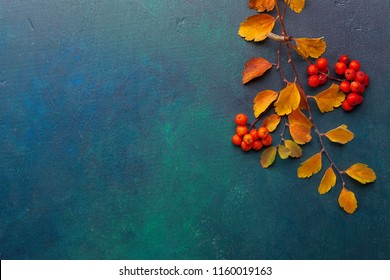 Two branches of autumn leaves (Spiraea Vanhouttei) and small red fruits Rowans on a dark blue-green painted wooden background.