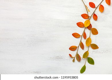 Two branches with colorful autumn leaves on a white shabby wooden background. Flat lay.