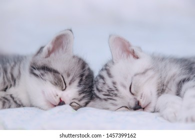 two brethren kitten sleeping in bed