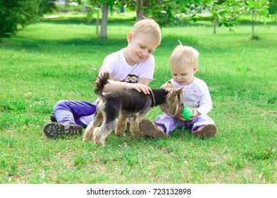 Two brothers play with a dog and soap bubbles in the park. Bright sunny summer day.