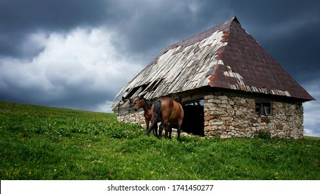 Two brown horses in front of the old stone house