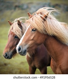 Horse Icon Stock Photos, Images & Photography | Shutterstock