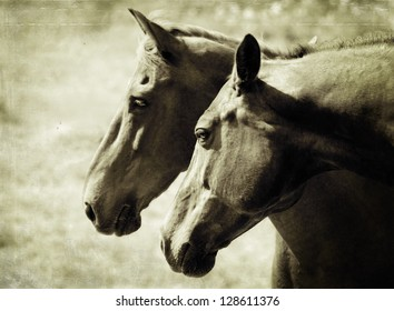 Two brown horses in love