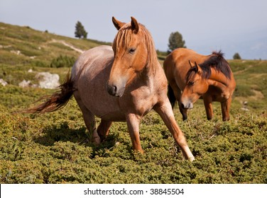 two brown horses in the mountains