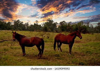 two brown horses on farmland at sunset