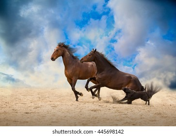 two brown horses run with the dog on the sand on the blue sky background
