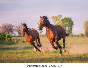 two brown horses are running ahead