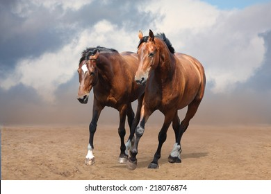 Two brown horses trotting free  at the desert