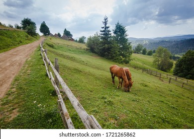 Two brown hourses eating grass on green summer pasture with wooden fence on farm in Carpathian mountains in Ukraine