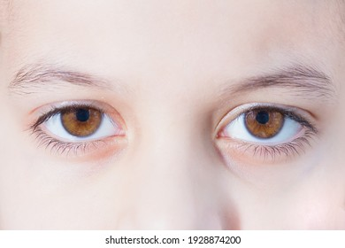Two brown human eyes. Close-up photo.