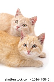 Two brown kittens isolated on a white background.